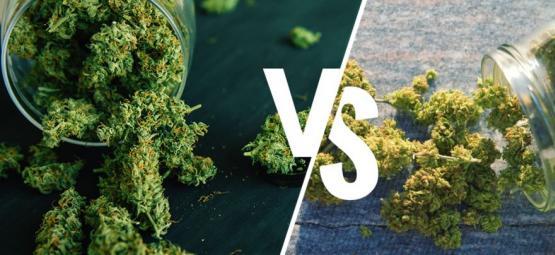 Herbe Cultivée En Intérieur Vs Extérieur : Laquelle Est Meilleure ?