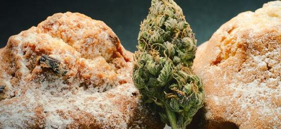 La Renaissance Hollandaise et Comestible Du Cannabis