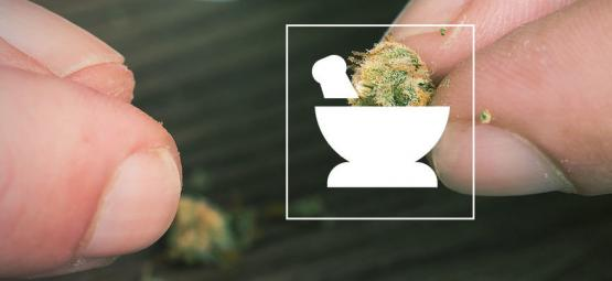 10 Façons D'effriter Le Cannabis Sans Grinder [Mise À Jour 2021]