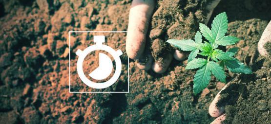Combien De Temps Ça Prend De Cultiver Du Cannabis?