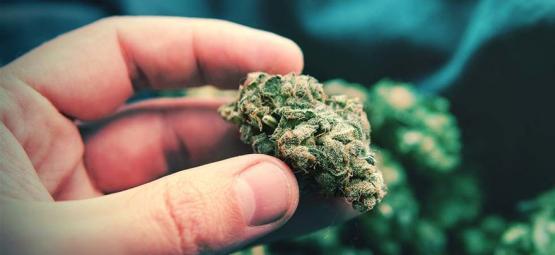 Têtes De Cannabis Pop-Corn: C'est Quoi Et Comment Les Éviter