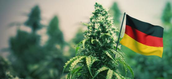 Les Meilleures Variétés De Cannabis À Cultiver En Extérieur En Allemagne