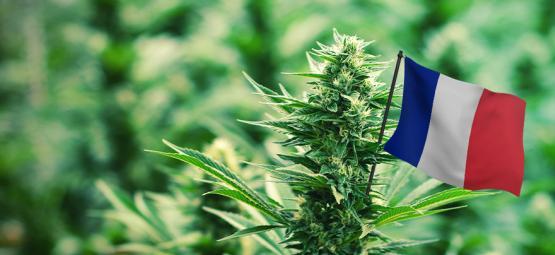 Meilleures Variétés De Cannabis D'Extérieur À Cultiver En France