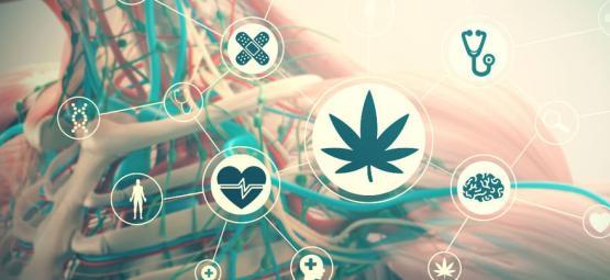 Les Effets Du Cannabis Sur Votre Corps