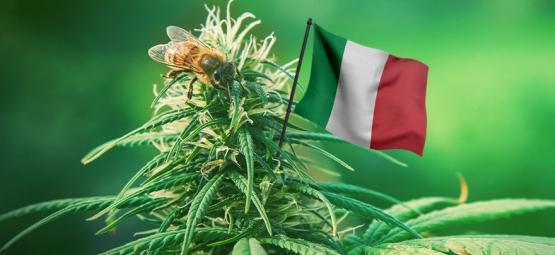 Bonnes Variétés De Cannabis Extérieur À Cultiver En Italie
