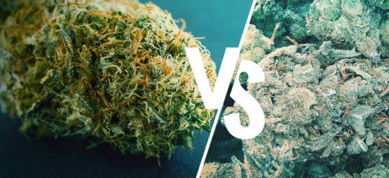 Bonne Et Mauvaise Weed: Comment Faire La Différence