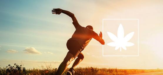 Effets De La Weed Sur La Performance Sportive