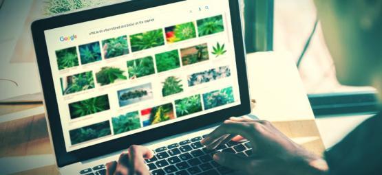 Les Meilleurs Sites Internet Pour Les Stoners [Mise À Jour 2021]