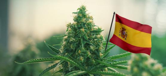 Meilleures Variétés De Cannabis En Extérieur À Cultiver En Espagne