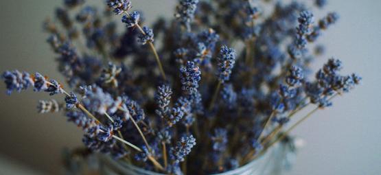 Les Meilleures Plantes A Melanger Au Cannabis