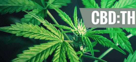 Les Bienfaits Des Différents Ratios CBD:THC
