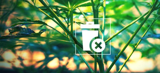 Ne Jetez Plus Vos Tiges De Cannabis !