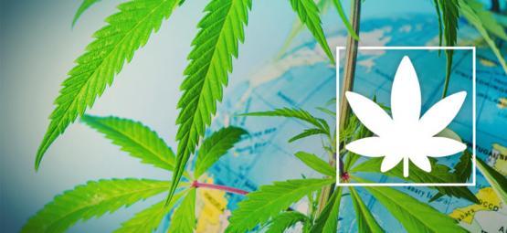 Où Fumer Légalement Du Cannabis En Europe