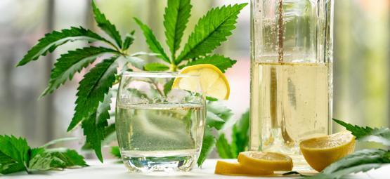 Comment Faire Un GinJah : Un Gin N' Tonic Infusé Au Cannabis