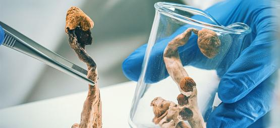 Culture des Champignons : Comment Faire Un Port D'injection en Silicone