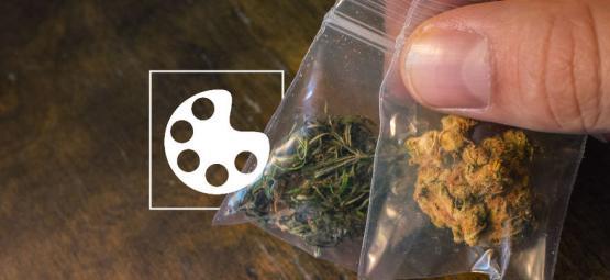 Les Différentes Couleurs Du Cannabis Et Ce Qu'elles Veulent Dire