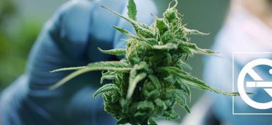 Comment Utiliser La Weed Pour Arrêter De Fumer