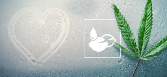 Les Meilleures Graines De Cannabis Pour Climats Humides