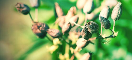 Comment Cultiver Des Graines De Tabac
