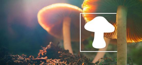 Comment Identifier Différents Types De Champignons Magiques