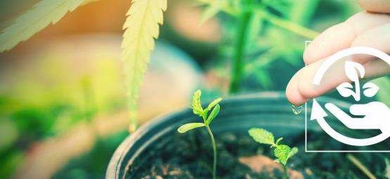 Les Différentes Étapes De Culture Du Cannabis Et Leur Importance