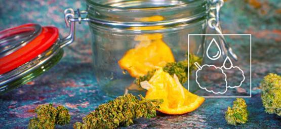 Comment Récupérer Une Weed Trop Sèche