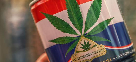 Nederwiet ! Weed Néerlandaise Et Top 3 Des Variétés De Cannabis Créées Aux Pays-Bas