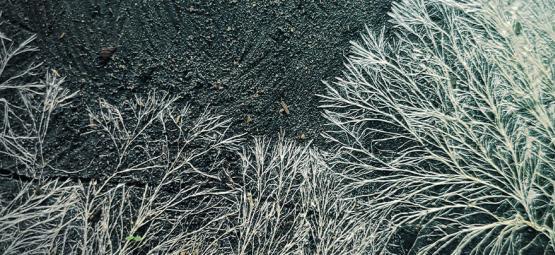 Qu'est-Ce Que Le Mycélium?