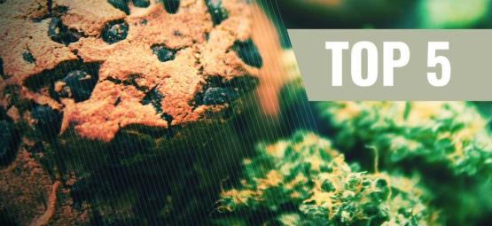 Top 5 Recettes De Biscuits Au Cannabis