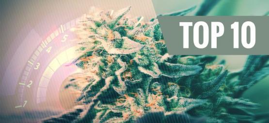 Top 10 Des Variétés De Cannabis Les Plus Rapides Pour 2018