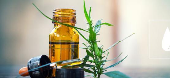 Guide Complet Sur L'Huile De Cannabis Extraite Au CO₂