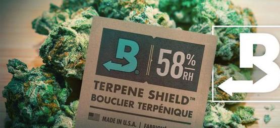 Comment Garder Votre Weed Super-Fraîche Avec Boveda