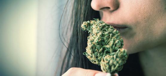 Comment Éliminer L'Odeur Du Cannabis