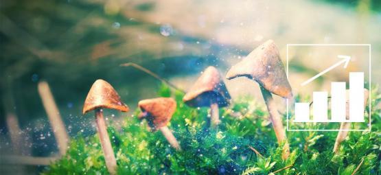 Cultiver Des Champignons Magiques Avec Notre Kit De Culture En Extérieur