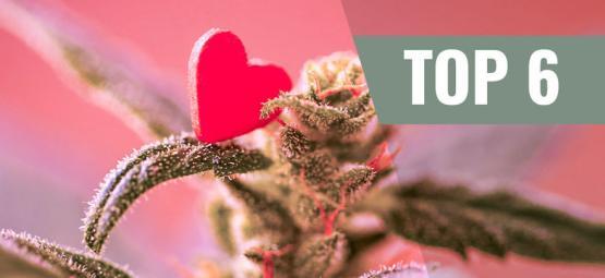Top 6 Des Variétés De Cannabis Les Plus Aimées.