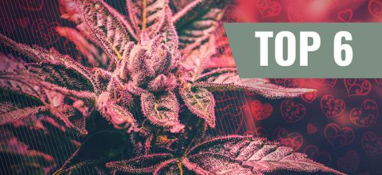 Top 6 Des Variétés De Cannabis Pour La Saint-Valentin