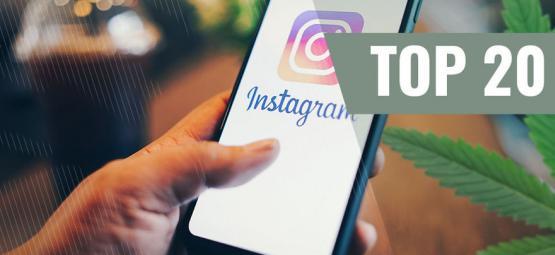 Les 10 Meilleurs Comptes Instagram Sur L'herbe Que Vous Devez Suivre