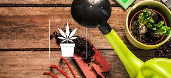 10 Outils Indispensables Pour Le Cultivateur De Cannabis