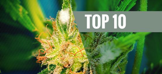 Top 10 Des Variétés De Cannabis Anti-Moississures