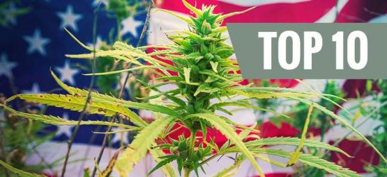 Top 10 Des Variétés De Cannabis Issues Des États-Unis