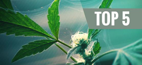 Top 5 Des Répulsifs Naturels Anti-Nuisibles Pour Le Cannabis