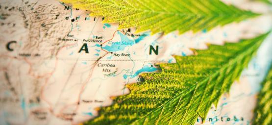 Dans Quels Pays Fume-T-On Le Plus D'herbe ?