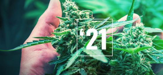 Les Meilleures Variétés De Cannabis En 2021