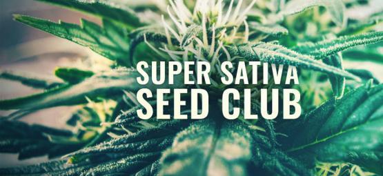 Super Sativa Seed Club Est De Retour !