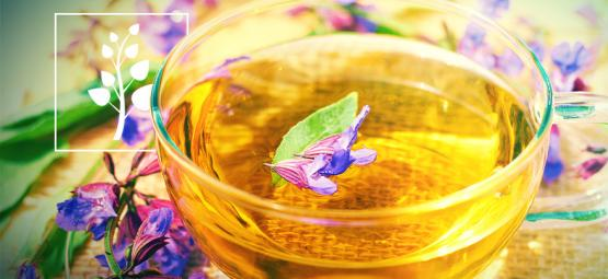Comment Faire Du Thé À La Salvia Divinorum?