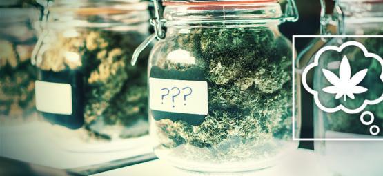 Comment Devrions-Nous Nommer Les Variétés De Cannabis Dans Le Futur ?