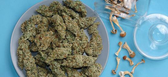 Peut-On Mélanger La Weed Et Les Champignons Magiques?