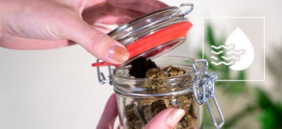 Aérer Ses Têtes En Affinant Son Cannabis