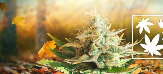 8 Raisons Qui Prouvent Que L'Automne Est La Meilleure Saison Pour Fumer De La Weed