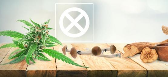La Weed, Les Champignons Et L'Ayahuasca Ne Sont Pas Des Drogues